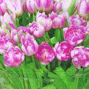 P + D Serviette, Tulip time, 3 lagig, 33x33cm, 1/4 Falz