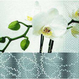 P+ D Serviette, Silant beauty, 3 lagig, 33x33cm, 1/4 Falz