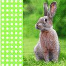 P+ D Serviette, Free rabbit, 3 lagig, 33x33cm, 1/4 Falz
