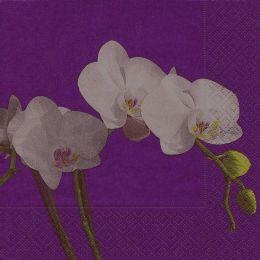 P + D Serviette, Butterfly orchid, 3 lagig, 33x33cm, 1/4 Falz
