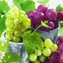 P + D Serviette, Fruity grapes, 3 lagig, 33x33cm, 1/4 Falz